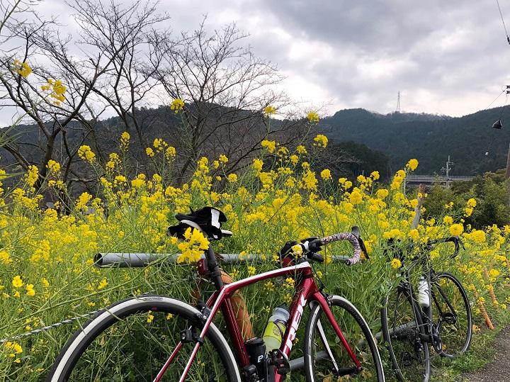 【のんびりモーニングライド】中萩(新居浜)から西条武丈公園方面へ四国の道をのんびり走って来ました。3/23